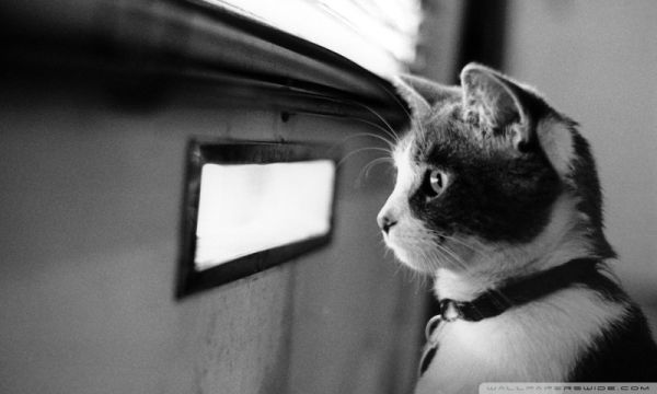 waiting_cat-wallpaper-800x480
